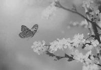 Come farfalle