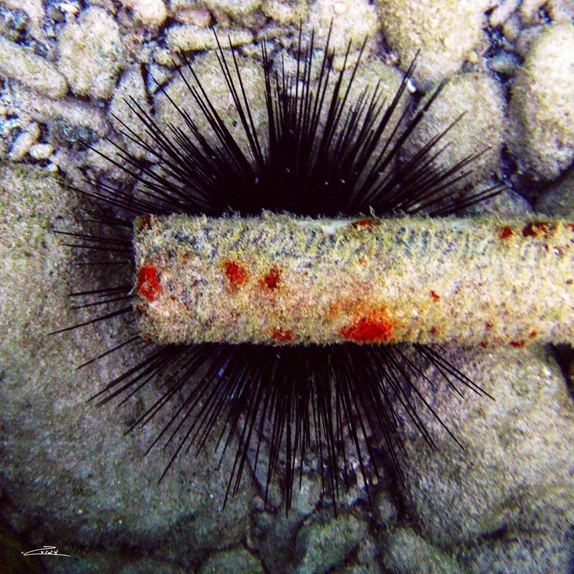 L'Angolo di Marta Lock (IE): E la natura si trasforma in arte nelle immagini fotografiche subacquee